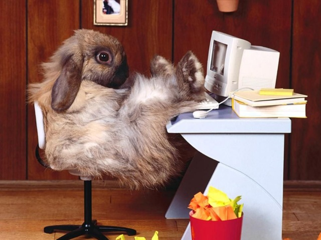 Funny Rabbit Wallpapers 2.jpg